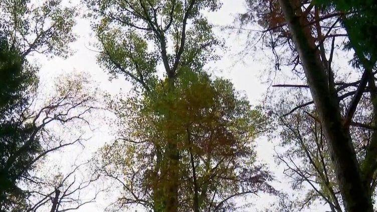 Pyrénées-Atlantiques : l'arboretum de Payssas, un sanctuaire pour les arbres (France 2)