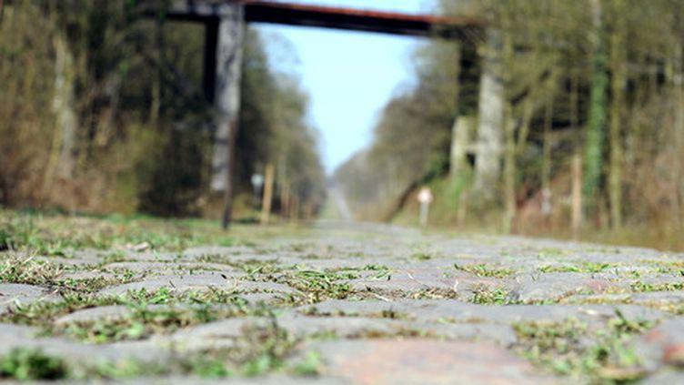 Les pavés légendaires de la Trouée d'Arenberg, haut-lieu de la course cycliste Paris-Roubaix. (FRANCK FIFE / AFP)