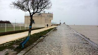 La municipalité de La Rochelle(Charente-Maritime) a peint en bleu les arbres, souvenir de la montée d'eau lors de la tempête Xynthia de 2006. (CAROLE BELINGARD / FRANCETV INFO )