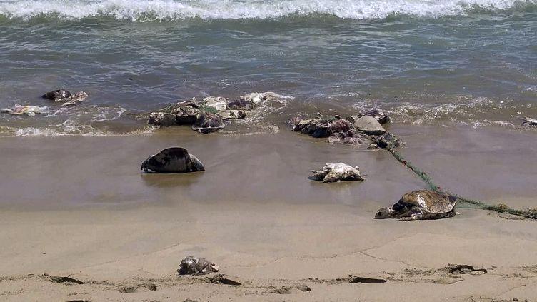 Une photo de tortues mortes diffusée par la protection civile de l'Etat d'Oaxaca (Mexique), le 29 août 2018. (OAXACA CIVIL PROTECTION OFFICE / AFP)