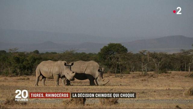 Tigres, rhinocéros : la décision chinoise qui choque