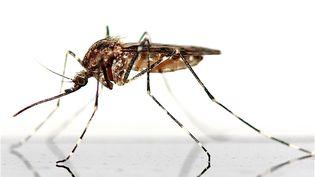 Image d'illustration moustiques (AFP PATRICK LEFEVRE / BELGA MAG)