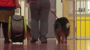 Des chiens au contact des détenus de la prison de Nantes (Loire-Atlantique). (FRANCE 3)