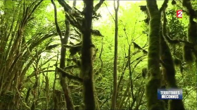 Découverte : les Baronnies, la jungle cachée des Pyrénées