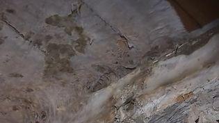 La mérule est un champignon qui infeste les murs des maisons. En Bretagne, la région de France la plus touchée, des entreprises de traitement luttent contre ce fléau. (France 3)