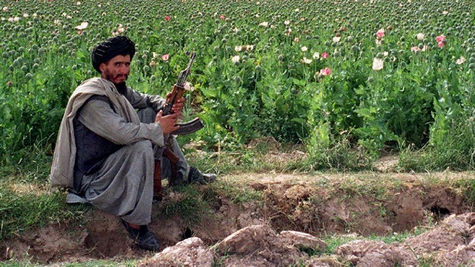 Afghanistan : 15 000 hectares dopium à détruire