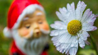 Marguerites en fleurs également dans ce jardin de Francfort, en Allemagne, le 17 décembre. (PATRICK PLEUL / DPA)