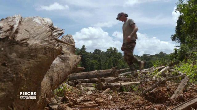 """Pièces à conviction. Guyane : """"Un kilomètre carré de forêt primaire par terre pour générer 1,8M€ de chiffre d'affaires"""""""