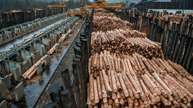Des grumes de résineux dans une scierie à Urmatt, dans l'est de la France, le 16 janvier 2018. (PATRICK HERTZOG / AFP)