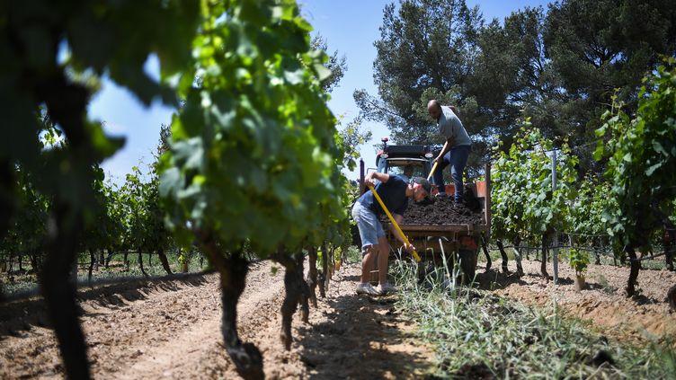 La France a connu durant ces dernières semaines de nombreuses intempéries provoquant des dégats sur les vignobles français. (ANNE-CHRISTINE POUJOULAT / AFP)