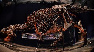 Le tyrannosaure T.rex exposé au Museum d'histoire naturelle (juin 2018)  (Stéphane de Sakutin / AFP)