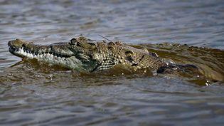 Un crocodile en Floride (Etats-Unis), le 28 juin 2012. (GETTY IMAGES NORTH AMERICA / AFP)