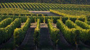 Des vignes à Rions (Gironde), le 5 septembre 2019. (J-B NADEAU / ONLY FRANCE / AFP)