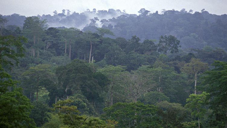 Forêt tropicale à Mayombe au Congo (MICHEL GUNTHER / BIOSPHOTO / AFP)