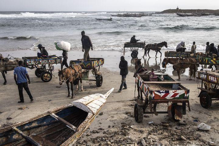 Chevaux et conducteurs attendent sur la plage l'arrivée des pêcheurs près de Dakar. (JOHN WESSELS / AFP)