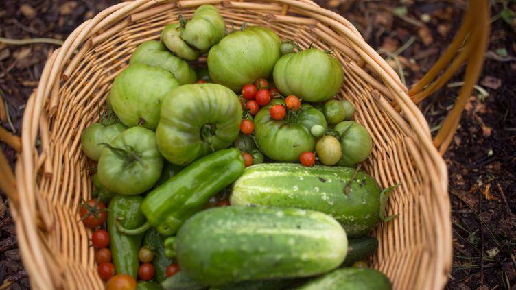 Panier de fruits et légumes avec tomates vertes (GETTY IMAGES)