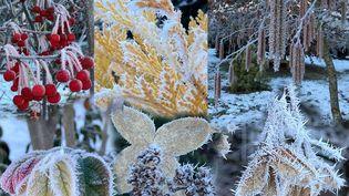 Oui, le jardin sait se faire beau à la mauvaise saison ! (ISABELLE MORAND / MAS DES BEALIERES / RADIO FRANCE / FRANCE INFO)