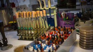 L'unité des bactéries pathogènes de l'Institut Pasteur, le 18 novembre 2013. (MAXPPP)