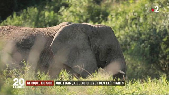 Afrique du Sud : une réserve pour protéger les éléphants