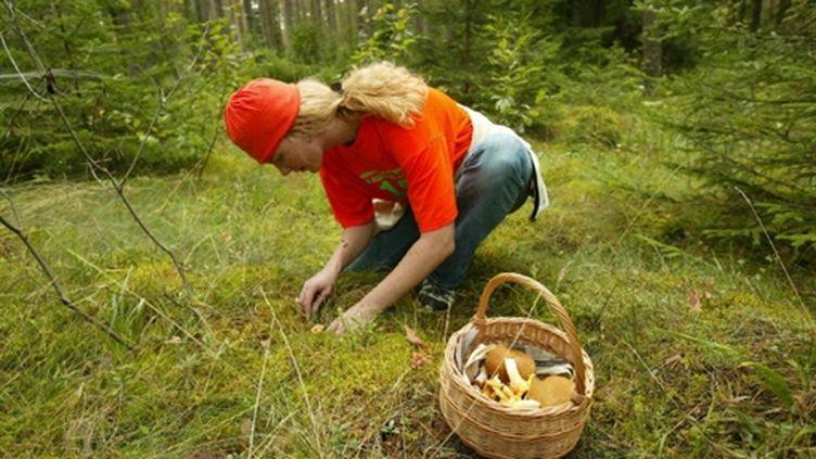 Attention, la cueillette des champignons peut se révéler fatale (AFP - Aivars LIEPINS)