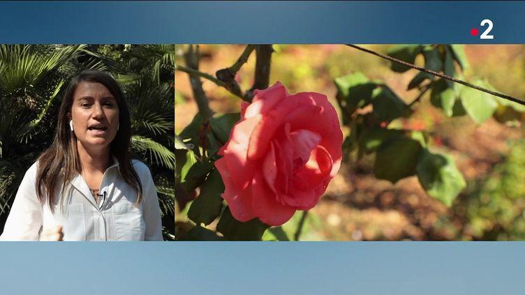 Les Journée du patrimoine battent leur plein en ce vendredi 17 septembre.En duplex du Cap d'Antibes, AudreyRichier, journaliste pour France 2,présente les magnifiques jardins de la villaEilenroc. (FRANCE 2)