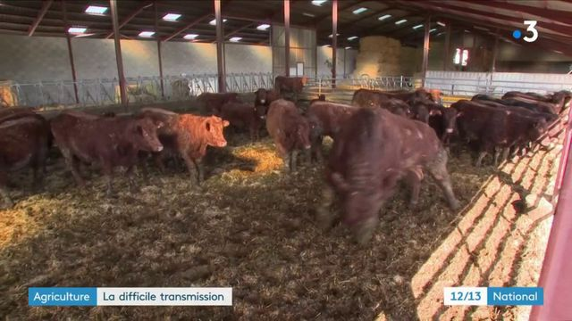 Agriculture : la difficile transmission
