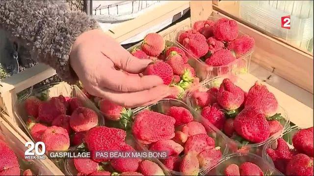 Gaspillage alimentaire : la revanche des fruits et légumes moches