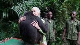 La femelle chimpanzé Wounda a enlacé une dernière fois la célèbre primatologue Jane Goodall au moment de retrouver la vie sauvage en République démocratique du Congo, fin 2013. (FRANCETV INFO / YOUTUBE / INSTITUT JANE GOODALL FRANCE)