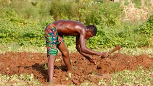 Un agriculteur près de Lome, la capitale du Togo. (AFRICA GODONG / ROBERT HARDING VIA AFP)