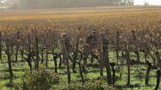 Vignoble : les producteurs de cognac résistent à la crise sanitaire (France 3)