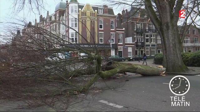 Tempête Friederike : 9 morts dans le nord de l'Europe