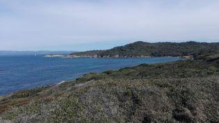 Le littoral de l'île de Porquerolles (Var). (SOPHIE GLOTIN / RADIOFRANCE)