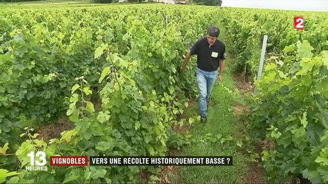 Gel de printemps : les vignerons s'attendent à des récoltes historiquement basses
