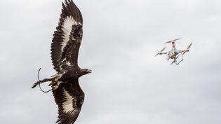 Un aigle intercepteundrone lors d'un exercice, dans une photo prise par l'armée de l'air française sur une base militaire non-précisée, le 25 octobre 2016. (ARMEE DE L'AIR / AFP)