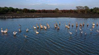 La cigogne blanche est une grande migratrice.     (ABDULMONAM EASSA / AFP)