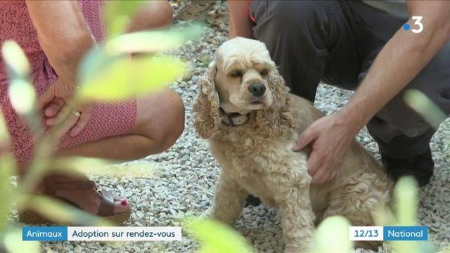 Animaux : la SPA lance le Mois de l'adoption pour les 8000 bêtes abandonnées cet été