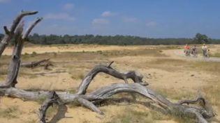 Parc désertique aux Pays-Bas (France 2)