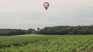 Vignobles d'Anjou : un vol en montgolfière au-dessus de la vallée de la Loire (FRANCE 2)
