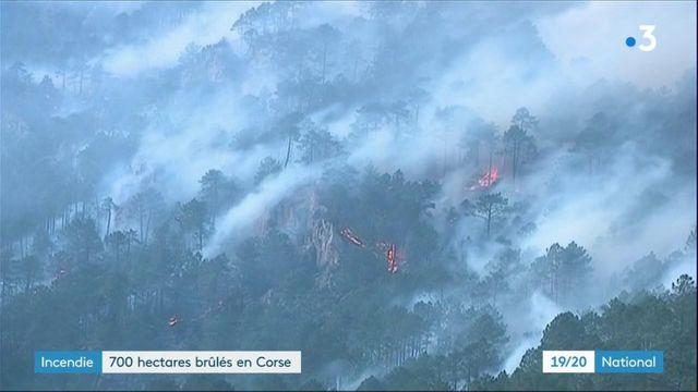 Corse : un violent incendie ravage 700 hectares
