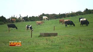 L'Irlande et ses verts pâturages (FRANCE 3)