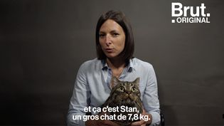 """VIDEO. """"Les chats gros, c'est les chats mignons"""" : elle alerte sur l'obésité des chats (BRUT)"""