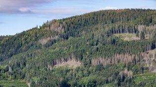 Les forêts françaises commencent à mourir en raison des sécheresses causées par le dérèglement climatique. Photo d'illustration dans les Vosges, le 19 août 2020. (JEAN-CHRISTOPHE VERHAEGEN / AFP)