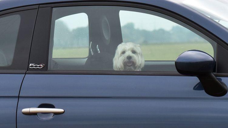 En cas de forte chaleur, un animal peut mourir rapidement, enfermé dans une voiture. (MATTHIAS HIEKEL / DPA / AFP)