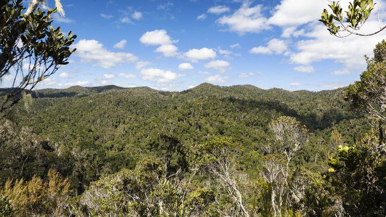 Une forêt tropicale dans le parc national Andasibe Mantadia de Madagascar, en août 2008. (KONRAD WOTHE / MINDEN PICTURES / AFP)