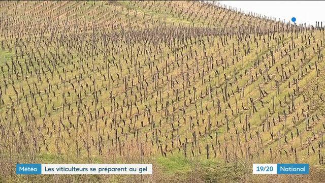 Météo : les viticulteurs se préparent au gel