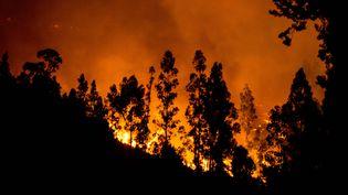Des incendies au Chili, à 283 km au sud de Santiago, la capitale chilienne, le 24 janvier 2017. (MARTIN BERNETTI / AFP)