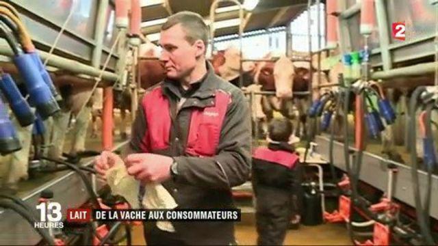 Lait : de la vache aux consommateurs
