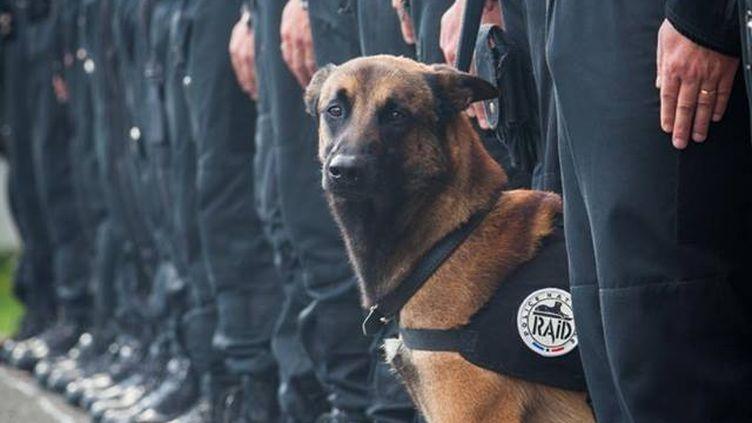 Cette photo d'illustration rend hommage au chien du Raid tué lors de l'assaut mené à Saint-Denis (Seine-Saint-Denis), mercredi 18 novembre. (POLICE NATIONALE / FACEBOOK)
