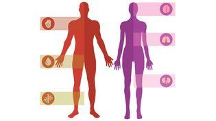 INFOGRAPHIE. Quels sont les effets de la pollution sur le corps humain (FRANCEINFO / vectoropenstock.com)