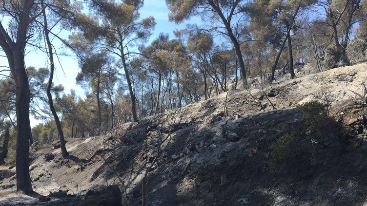 Plus de 3000 hectares ont été ravagés par l'incendie dans les Bouches-du-Rhône. (ROBIN PRUDENT/FRANCETV INFO)